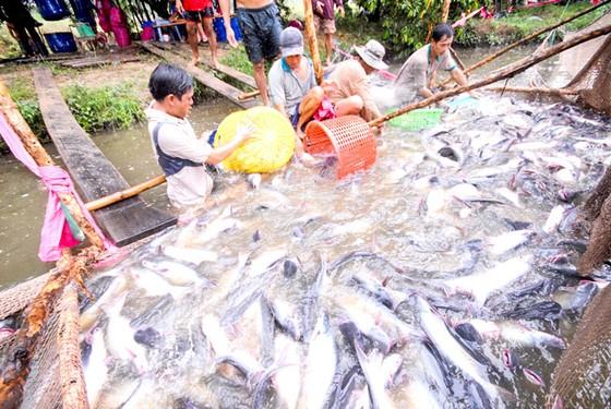 Xuất khẩu cá tra: Vượt 2 tỷ USD nhưng vẫn lo ảnh 1