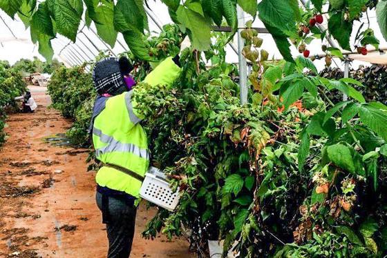 Australia: Hút lao động nhập cư ảnh 1