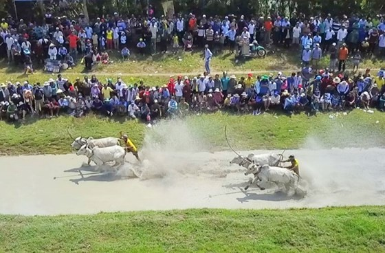Hàng chục ngàn người xem đua bò Bảy Núi ảnh 1