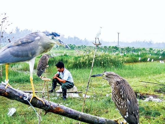Tận diệt chim cò ảnh 5