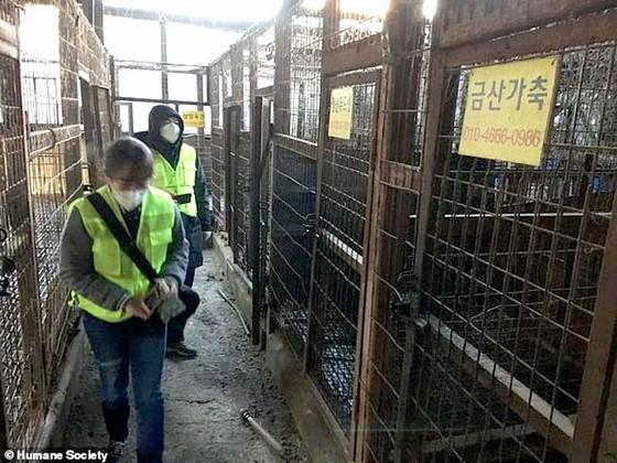 Hàn Quốc giải thể cơ sở giết mổ chó lớn nhất nước ảnh 1