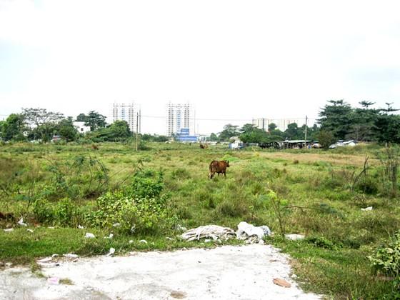 Ì ạch quy hoạch công viên, trường học ảnh 1