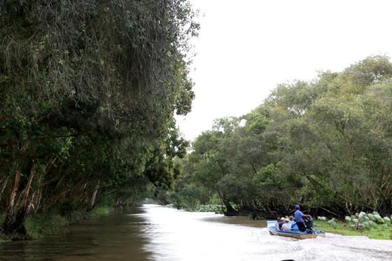 Sao Mai trên thiên đường xanh ngập nước ảnh 1