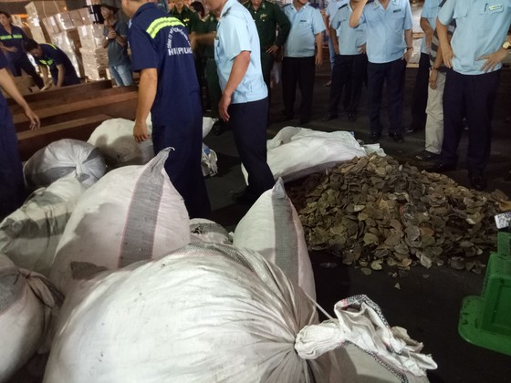Phát hiện 7,3 tấn nghi vảy tê tê ngụy trang trong các khúc gỗ ở cảng Cát Lái ảnh 4
