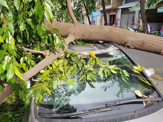Gió lớn, cây ngã, nhà tốc mái, nhiều người bị thương ảnh 8