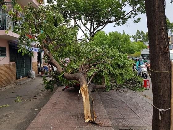 Gió lớn, cây ngã, nhà tốc mái, nhiều người bị thương ảnh 12