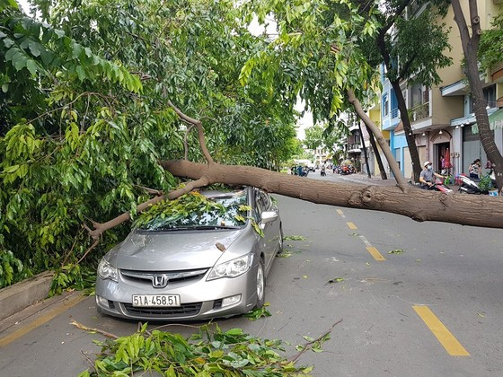 Gió lớn, cây ngã, nhà tốc mái, nhiều người bị thương ảnh 9