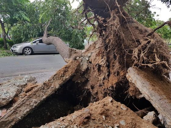 Gió lớn, cây ngã, nhà tốc mái, nhiều người bị thương ảnh 6