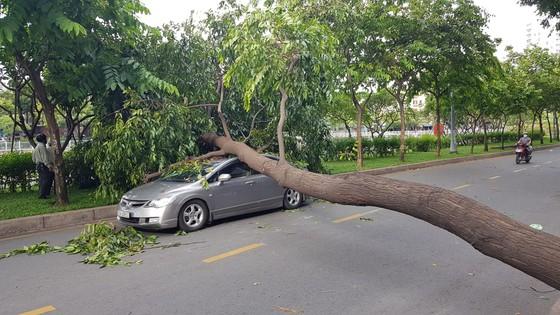 Gió lớn, cây ngã, nhà tốc mái, nhiều người bị thương ảnh 7