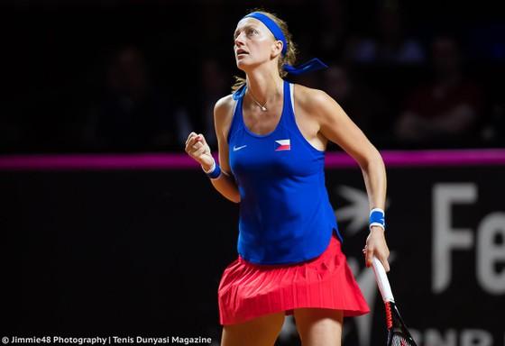 Cánh chom không mỏi Kvitova