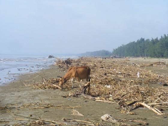 Kinh hoàng củi, rác ngập bãi biển Sầm Sơn tỉnh Thanh Hóa ảnh 10