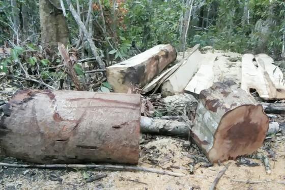 Khởi tố vụ phá rừng ở xã Ia Sao ảnh 1