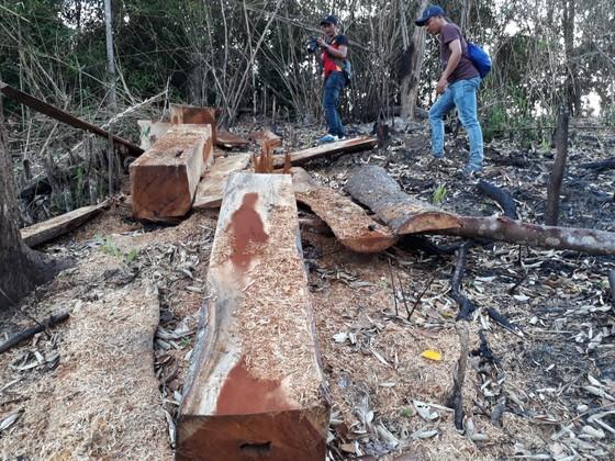Gia Lai điều tra việc phá rừng để trồng rừng ảnh 1