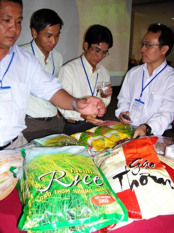 Đã có gạo xuất khẩu đạt ngưỡng 700 USD/tấn ảnh 3