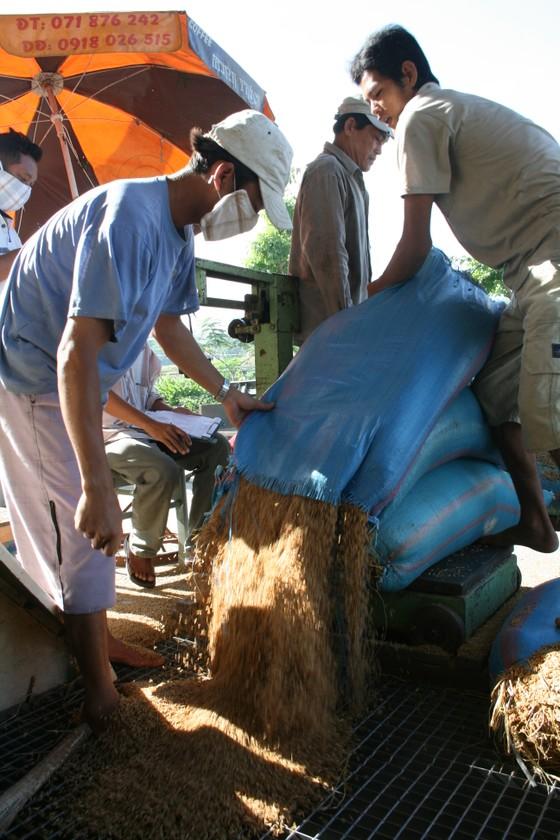 Đã có gạo xuất khẩu đạt ngưỡng 700 USD/tấn ảnh 2