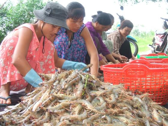 Bộ NN-PTNT khuyến cáo nông dân không nên bán