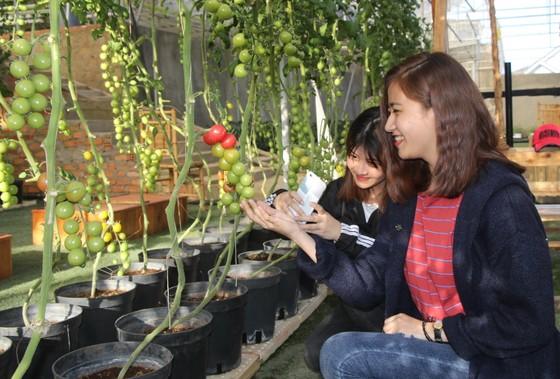 Tìm giải pháp phát triển du lịch gắn với nông nghiệp bền vững ảnh 3