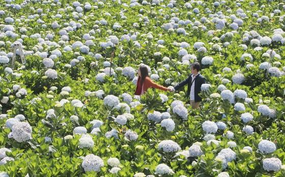 Tìm giải pháp phát triển du lịch gắn với nông nghiệp bền vững ảnh 2