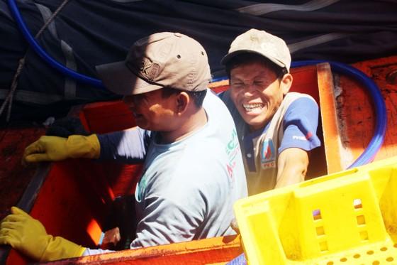 Ngư dân Bình Định trúng đậm cá ngừ, thu về tiền tỷ ảnh 2