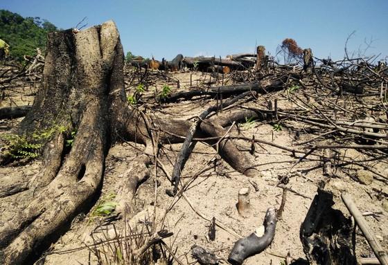 Có hay không việc cán bộ bao che vụ phá trên 60 ha rừng tại Bình Định? ảnh 3