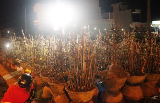 """Chủ mai Bình Định """"đổ bộ"""" QL1 chong đèn, dựng lều chào bán mai tết sớm ảnh 7"""