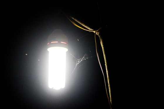 """Chủ mai Bình Định """"đổ bộ"""" QL1 chong đèn, dựng lều chào bán mai tết sớm ảnh 13"""
