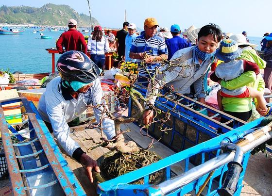 Tết theo những con tàu ra đảo Nhơn Châu ảnh 1