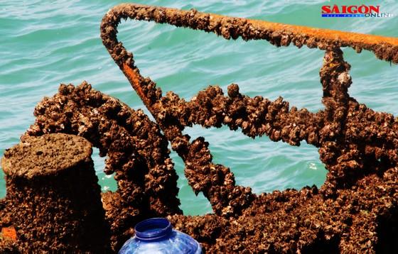 """Ra biển xem """"vòi bạch tuộc"""" kéo xác tàu ngàn tấn bị đắm ảnh 9"""