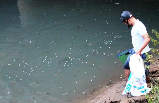 Làm rõ nguyên nhân cá chết trắng sông Bàu Giang ảnh 4