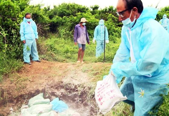 """Xuất hiện """"ổ"""" dịch cúm H5N6 có độc lực rất mạnh tại Phú Yên ảnh 4"""