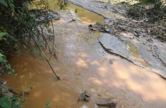 Ráo riết tìm nguyên nhân cá chết hàng loạt trên sông Bồng Miêu ảnh 3