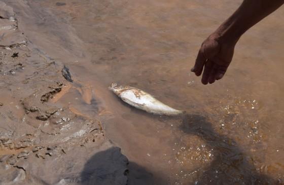Ráo riết tìm nguyên nhân cá chết hàng loạt trên sông Bồng Miêu ảnh 1