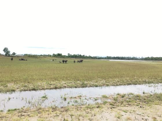 Quảng Bình: Hồ chứa nước cạn kiệt, 4.500 hộ thiếu nước sạch ảnh 1