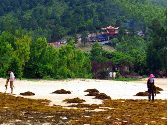 Sản vật làm giàu cho không ít ngư dân là rong biển dọc con đường đẹp nhất Vũng Chùa