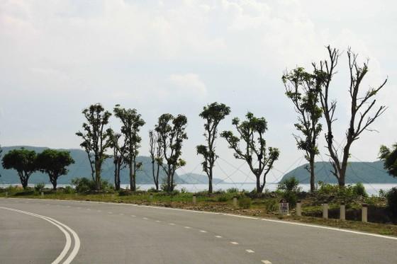 Một hàng cây bên vệ đường đang được chăm sóc