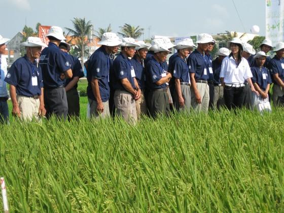 Gần 60.000 nông dân được tiếp cận qui trình canh tác lúa bền vững ảnh 1