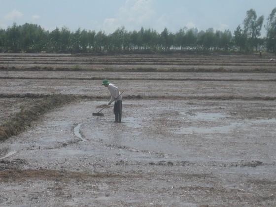 ĐBSCL tập trung ứng phó với mưa lũ  ảnh 2