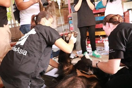 Tiền Giang chuyển giao 5 cá thể gấu tới Vườn Quốc gia Tam Đảo ảnh 3