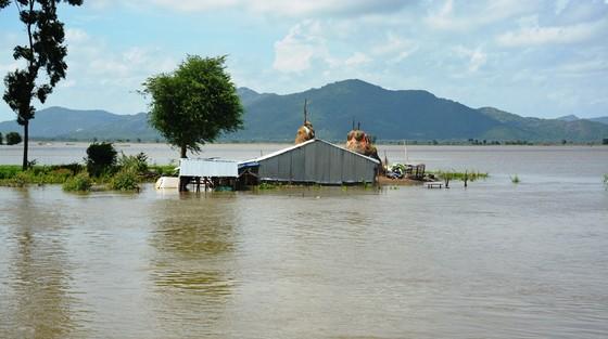 ĐBSCL khẩn cấp gặt lúa chạy lũ ở vùng biên giới  ảnh 11