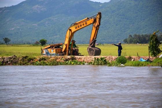 ĐBSCL khẩn cấp gặt lúa chạy lũ ở vùng biên giới  ảnh 5