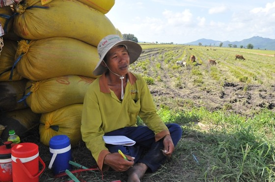 ĐBSCL khẩn cấp gặt lúa chạy lũ ở vùng biên giới  ảnh 9