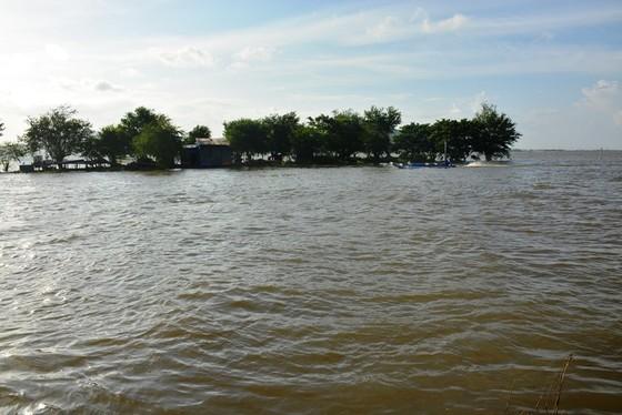 Hàng ngàn hécta lúa ở Tri Tôn bị lũ đe dọa ảnh 2