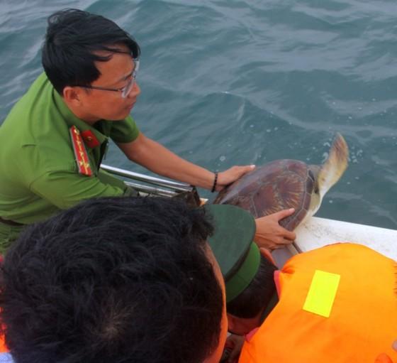 Thả 12 cá thể vích quý hiếm về vùng biển Phú Quốc ảnh 2