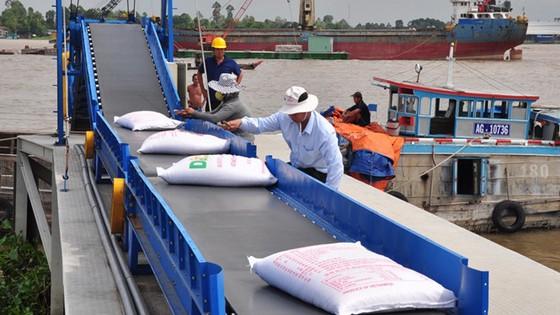 Xuất khẩu gạo 2017 dự báo khó tăng ảnh 1