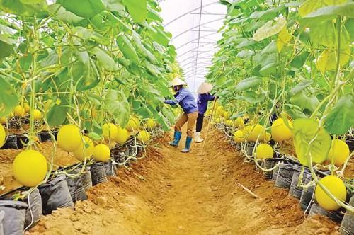Hướng đến nền nông nghiệp giá trị cao ảnh 1