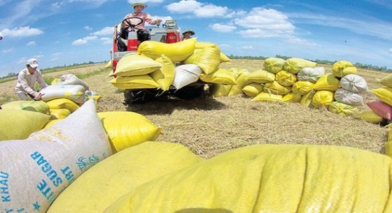 2,78 tỉ USD: xuất gạo bằng nhập thức ăn chăn nuôi ảnh 1