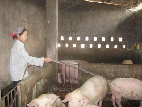 Tạo đà cho chăn nuôi nông hộ ảnh 1