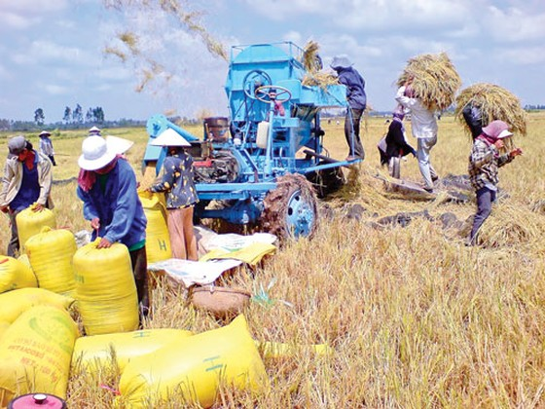Nông dân tự bơi-đổ nợ (K1): Nỗi buồn cường quốc lúa gạo ảnh 1