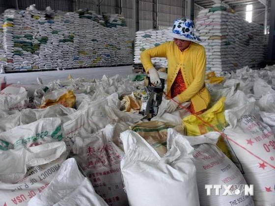 Philippines nhập thêm 200 tấn gạo Việt Nam ảnh 1