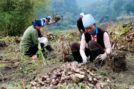 Việt Nam cơ bản hoàn thành mục tiêu Thiên niên kỷ ảnh 1